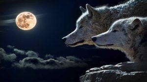La leggenda dei due lupi dentro di noi