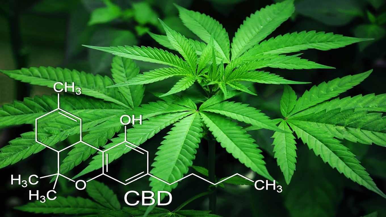 Gomme da masticare alla marijuana terapeutica